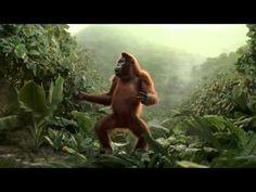 funny chimpanzee dancing after drinking orange juice - YouTube
