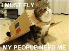 Funny kitty!