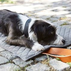 Cosmo Travel Dog Bed #Bed, #Dog, #Travel