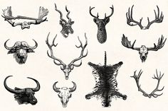 Hunting - Vintage Illustrations by Graphic Goods on @creativemarket