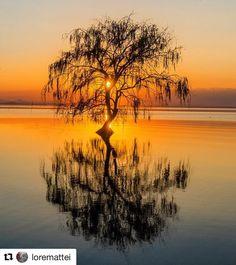 #Repost @loremattei  Alone. Great sunset on #laketrasimeno #umbria. #ig_italy #ig_italia #ig_umbria #trasimeno #trasimenolake #clickalps