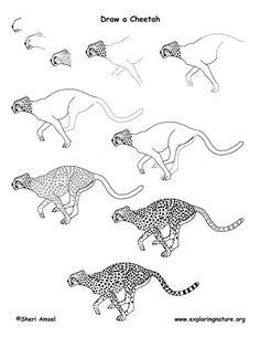 http://www.exploringnature.org/graphics/drawing/cheetah_drawing72.jpg