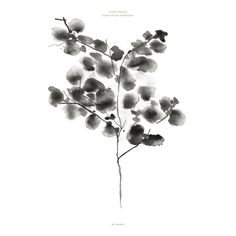 The Cotton plant botanic illustration by Garmi is a perfect present for plant lovers. The Cotton Plant print is the third poster in the plant series from (by) Garmi.	Colour: Black on white	Size:     A3,  29.7 x 4