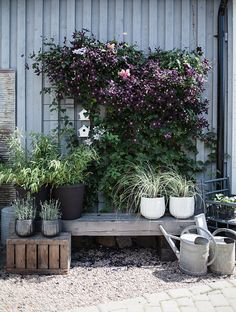 Container gardening is a fun way to add to the visual attraction of your home. You can use the terrific suggestions given here to start improving your garden or begin a new one today. Your garden is certain to bring you great satisfac Garden Trellis, Garden Plants, Balcony Garden, Pergola Patio, Backyard Landscaping, Summer Garden, Home And Garden, Interior Photo, Dream Garden