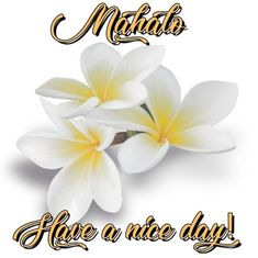 Thank You Images, Good Day, Your Image, Place Cards, Place Card Holders, Buen Dia, Good Morning, Hapy Day