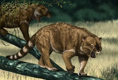Thylacoleo lives in the trees in ice age prehistoric australia. Main food source is the short faced kangaroo procoptodon. It's rare prey was diprotodon, rivals were humans megalania and saltwater crocodiles. Thylacoleo had a very strong crushing bite and used to attack the windpipes of enemies. The 3rd most powerful australian predator humans were scared of this dangerous monster.