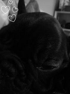 Good Cuby Chubby Adorable Dog - 199e8a8dd0f2f5e0515ccf0139902905--french-bulldogs  Trends_653077  .jpg