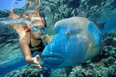 Snorkeling in the Great Barrier Reef near Cairns, Australia