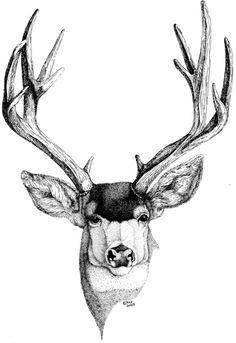 Mule Deer - WetCanvas