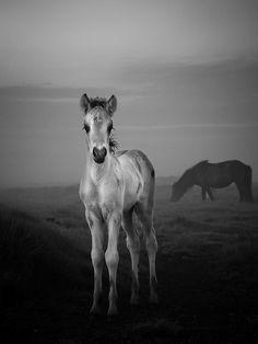 poni, anim, baby horses, photo quotes, beauti, black, wild mustangs, foal, wild horses