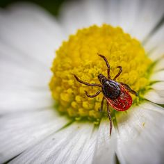 Outsmart Ticks with Smart Landscaping
