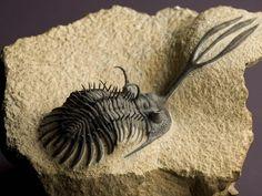 Trilobite with exquisite detail.