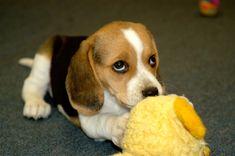 Pleeeaaaase don't take my toy