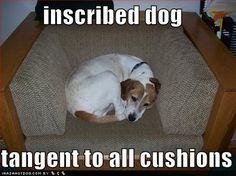 inscribed dog