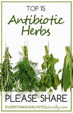 Top 15 Antibiotics Herbs ~ Medihealer Read More at: botgardening.blogspot.com