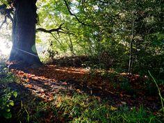 An early morning walk through Farnham Park.