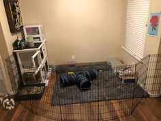 Dog/Rabbit DIY Rustic Modern Cute Pet Gate Enclosure Habitat Exercise X-Pen Ideas Rabbit Pen, Small Rabbit, Bunny Rabbit, Bunny Cages, Rabbit Cages, Flemish Giant Rabbit, Rabbit Habitat, Bunny Room, Foster Animals