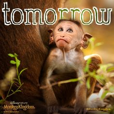 The wait is almost over! #MonkeyKingdom hits theatres tomorrow!