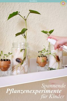 Bastelideen für Kinder Exciting plant experiments for children-on the growth of plants. Raised Flower Beds, Raised Garden Beds, Raised Beds, Montessori Blog, Plant Experiments, Dulux Valentine, Preschool Garden, Preschool Crafts, Decor Inspiration