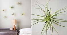 20 Weird House Plants You Didnt Know You Needed via Brit + Co