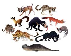 Leopards, panthers and bears, oh my! Brendan Wenzel's Carnivora is a quirky, fun look at the animal kingdom.