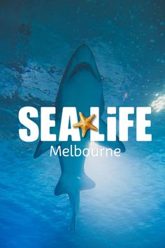 Sea life melbourne lies on the bank of the yarra river in the heart of the city. looking for things to do in melbourne, sea life is a great destination. Brisbane, Sydney, Melbourne Australia, Sea Life Melbourne Aquarium, Travel With Kids, Family Travel, Melbourne Attractions, Australia Travel Guide