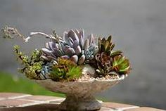 succulent perch - Yahoo Image Search Results