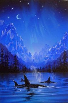 Moonlight Night Journey - Killer whale by Kentaro Nishino
