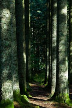 A mysterious path through the trees, would love to walk this.  (by Bergen64)