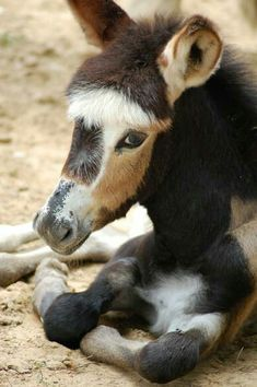 Wee donkey, such a pretty face!