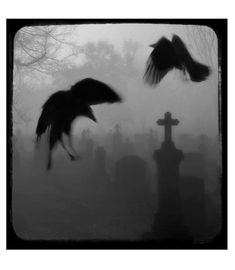 Graveyard, Spooky, black and white photography, ravens, Gothic, tombstones - Crows Legacy. $16.00, via Etsy.