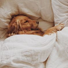 Some of the things we admire about the Trustworthy Golden Retriever Puppies Cute Baby Animals, Animals And Pets, Funny Animals, Cute Dogs And Puppies, I Love Dogs, Doggies, Cutest Dogs, Lab Puppies, Cute Creatures