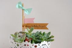 a pretty cool life.: gifting: a tiny succulent garden