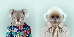 Fashion Zoo