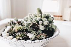 Pflanzen in der Schale