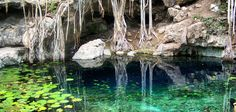 X-Batún Cenote - San Antonio Mulix, Yucatan