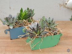 Colorful #vintage #succulent containers