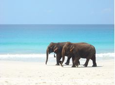 Elephants & Sea..two of my favorite things