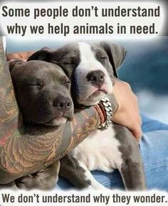 The picture says it all...RESCUE/FOSTER/ADOPT/SHARE !!!!!!!!!!!!!!!!