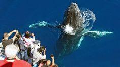 sea world australia - Google Search Whale Watching Season, Gold Cost, Sea World, Tourism, Photo Galleries, Coast, Queensland Australia, Seasons, Gallery