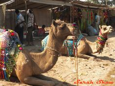 A stall sells decorations for the stars of the Pushkar Camel Fair in India  via WanderShopper