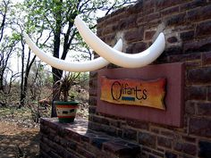 Olifants Camp in the Kruger Park Africa Destinations, Travel Destinations, Kruger National Park, Wonderful Places, South Africa, Beautiful Homes, Wildlife, Camping, Paladin