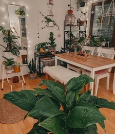 Green Rooms, Just Relax, Stay At Home, Home Look, Cozy House, Apartment Living, Future House, Plant Leaves, Sweet Home