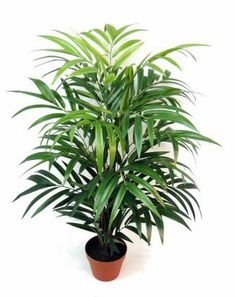 Tall Artificial Bamboo Plants, Fake Bamboo Decor, Natural Look Bamboo Shoots with Leaves. Bamboo Tree, Bamboo Plants, Evergreen, Touch, Side Gardens, York Apartment, Design, Foyer, Bathroom