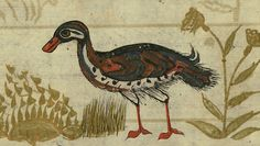 Turkish version of the Wonders of creation, A duck, Walters Manuscript W.659, fol. 116a detailThis is an Ottoman illuminated and illustrated Turkish version of ʿAjāʾib al-makhlūqāt (Wonders of creation) by Zakarīyā al-Qazwīnī (d. 692 AH / 1293 CE), made at the request of the Vizier Murtaza Paşa (Murtaḍá Pāshā) (fl. eleventh century AH / seventeenth CE). The codex was completed in 1121 AH / 1717 CE by Muḥammad ibn Muḥammad Shākir Rūzmah-ʾi Nāthānī. There are 444 paintings illustrating the…