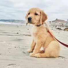Posted by @puppytrip