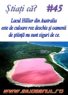 Stiati ca - Aiud Portal Web Cultura General, Puerto Rico, Did You Know, Portal, Places To Go, Unicorn, Facts, Culture, Fashion