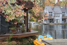 Beautiful Reston, VA fall treescapes