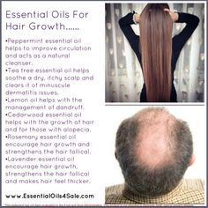 Essential Oils, Hair Growth And Dandruff Destroyers With Head Massages - Young Living Essential Oils, Beauty & Health Products Cedarwood Essential Oil, Essential Oils For Hair, Essential Oil Uses, Doterra Essential Oils, Young Living Essential Oils, Yl Oils, Peppermint Essential Oils, Hair Growth Oil, Young Living Oils