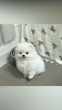 Cute Puppy Videos, Funny Animal Videos, Funny Animals, Cute Animals, Baby Dogs, Cute Puppies, Cute Cats, Pets, Happy
